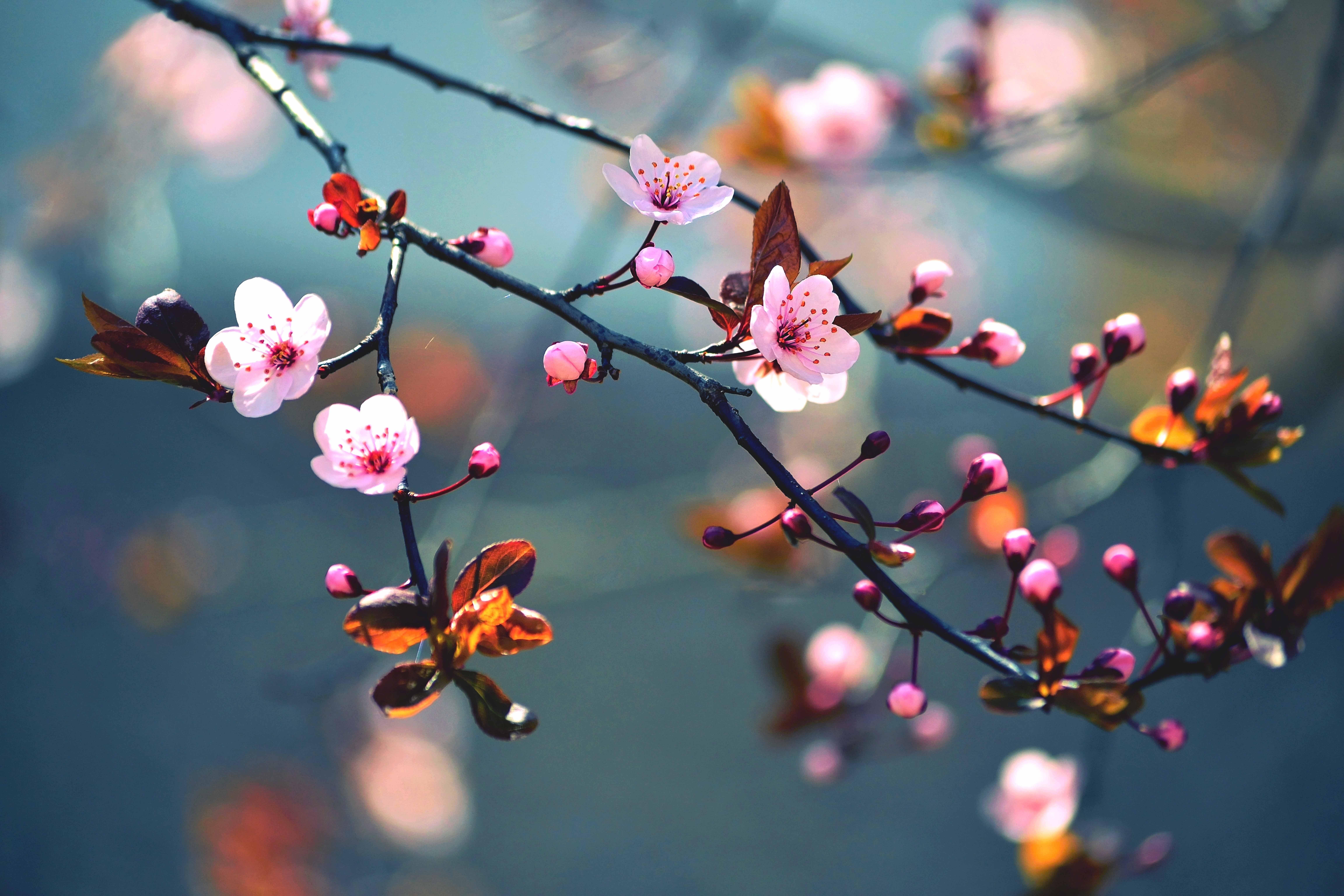 Обои На Телефон Бесплатно Весна